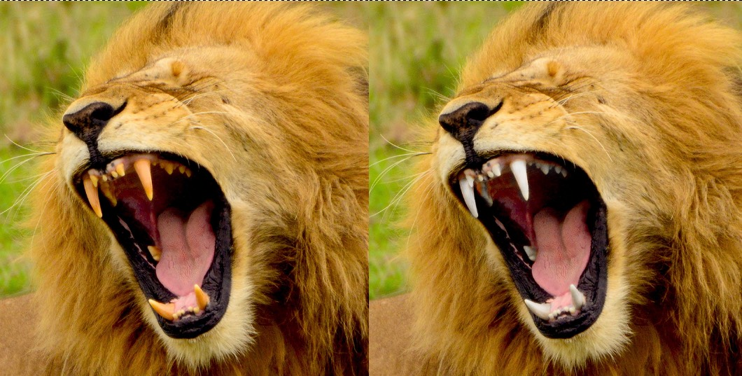 07 - Lions Teeth Finished